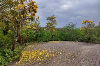 Jual Tanah di Pecatu Indah Resort Cluster Anggrek